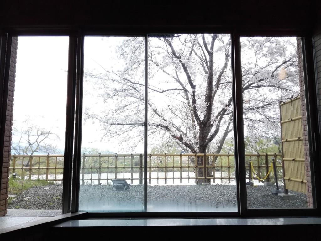【4月20日ホテル大浴場からの桜景色】